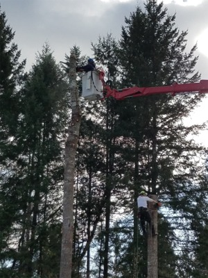 Gig Harbor Tree Removal Services